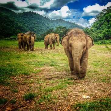 Elephant Nature Park Chiang Mai - the elephant conservation center