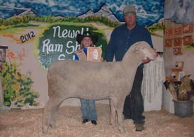 Anderson  Family has been raising Rambouillet sheep for over 35 years.  A dual  purpose breed focus