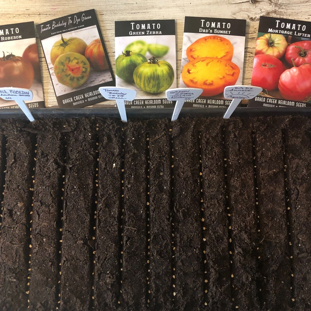 SOWING THE FIRST SEEDS OF THE SEASON