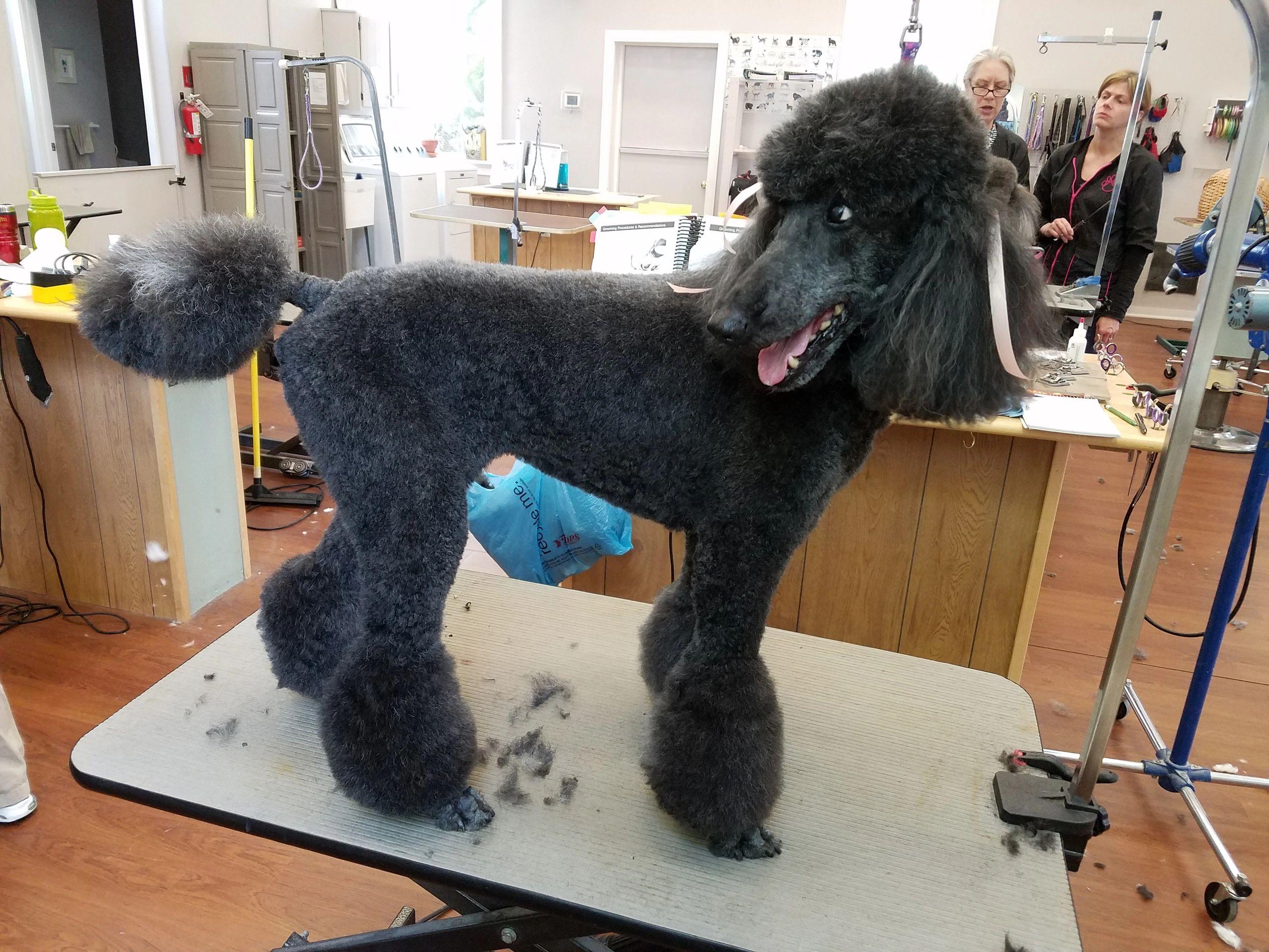 Dog groomer the dog groomer llc clinton missouri solutioingenieria Gallery