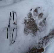 Evidence | North American Dogman Project