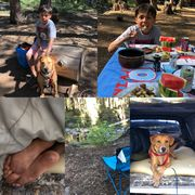 A collage of pictures of a boy and his dog camping