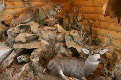 World class trophy room design, consultation and construction including mountains & wildlife scenes