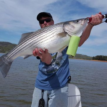 Striper fishing, Pigeon Forge, Gatlinburg, east TN, Cherokee lake, fishing guide, striped bass