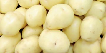 Blue Sky Farms of Florida White Potatoes