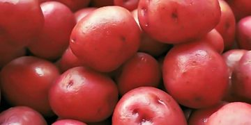 Blue Sky Farms of Florida Red Potatoes
