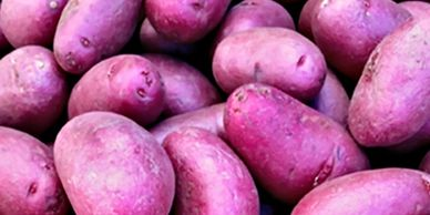 Blue Sky Farms of Florida Purple Potatoes