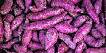 Blue Sky Farms of Florida  Purple Sweet Potatoes