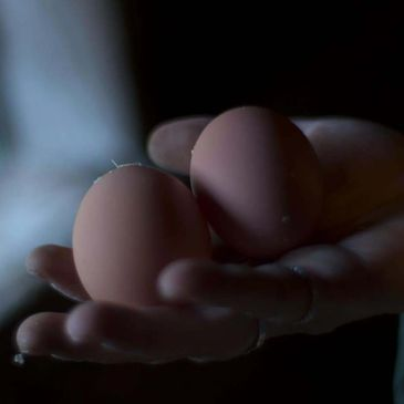 A hand holding two farm fresh eggs.