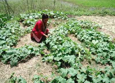 Sustainable Food Production in Nepal