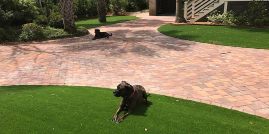 Mount Pleasant, SC pool turf. Artificial turf. Artificial lawn. Pet grass.
