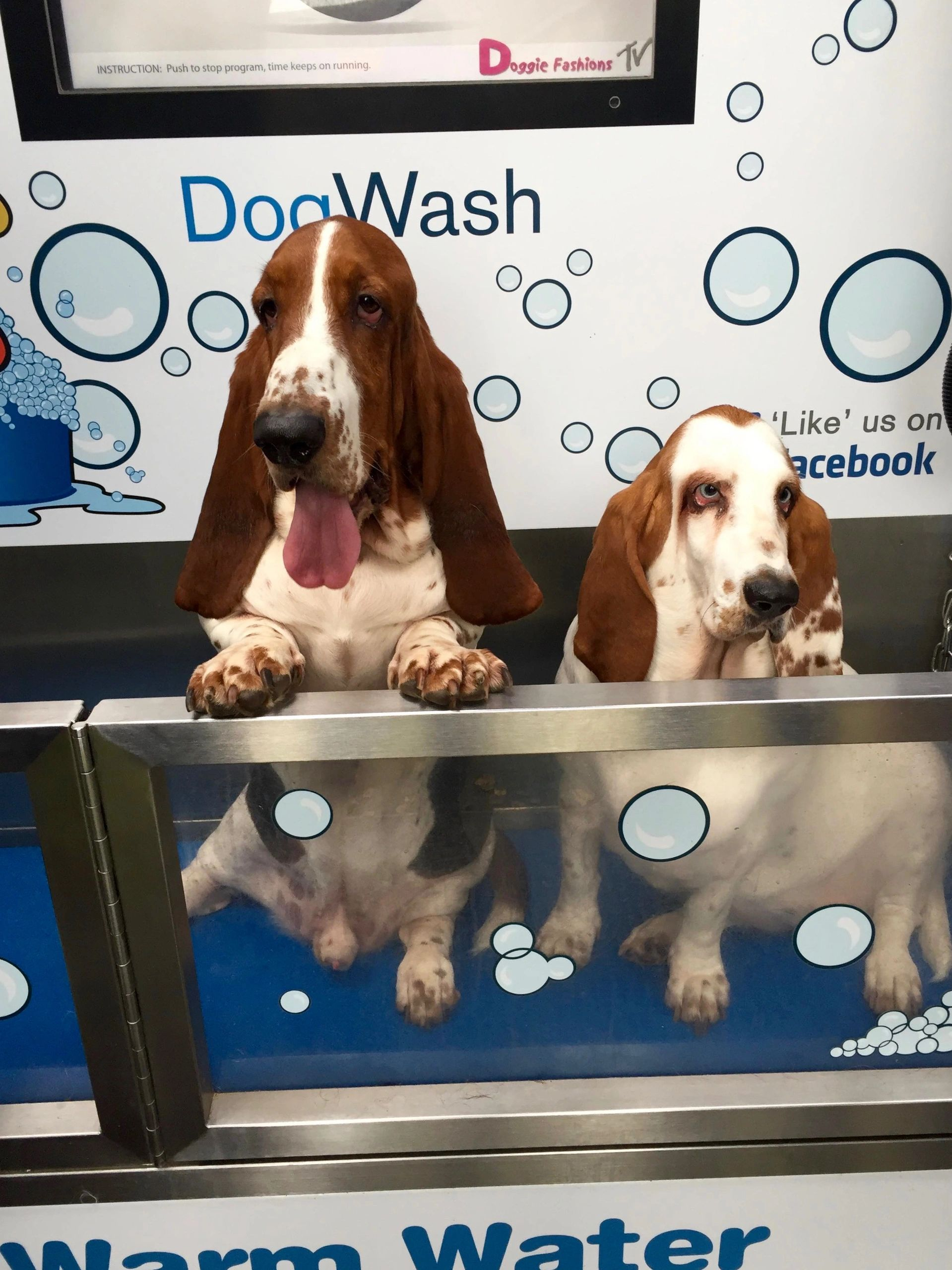 Self service dog wash doggie fashions solutioingenieria Images