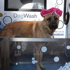 Self Service Dog Wash at Trentham Estate