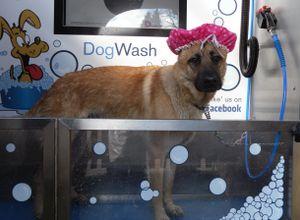 Self service dog wash doggie fashions photo gallery solutioingenieria Choice Image