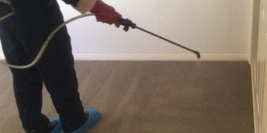 Technician treating for fleas in carpet areas