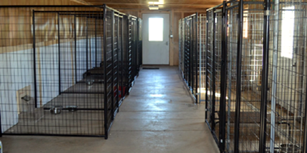 Boarding Facility and Pointing Labrador Training facility