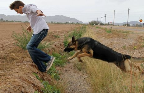 Jumping German Shepherd dog with black and ten beautiful female