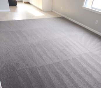 Steam Carpet Cleaning in Detroit MI