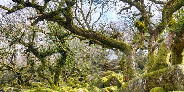 Wistmans Wood, Dartmoor, Devon