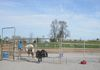 Our Round Pen used for Horse Training and Beginner Lessons