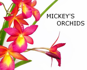 Mickey's Orchids