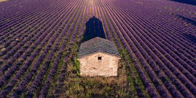 Young Living Lavender Farm and Distillery—SIMIANE-LA-ROTONDE, FRANCE