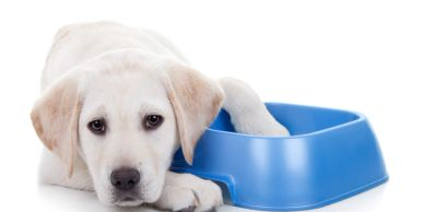 we supply disposable water bowls