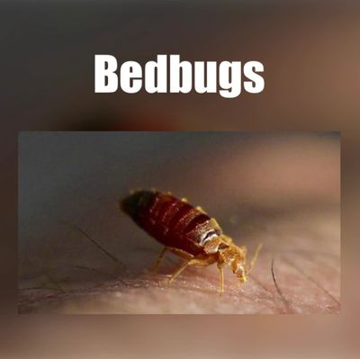 BEST BED BUG EXTERMINATION IN BALTIMORE, BED BUG INFESTATION, BEST BED BUG CONTROL IN MARYLAND, AFFO