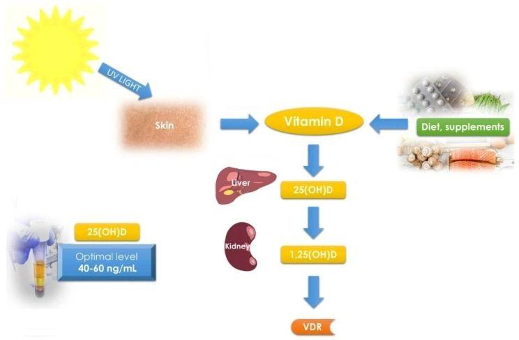 Non Methylated Prohormones Uk