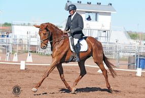 Eventing Mare for sale in Albuquerque, New Mexico
