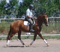 Off-the-track thoroughbred for sale in Albuquerque, New Mexico