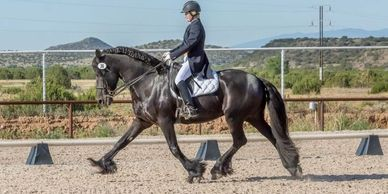 Prix St Georges Stallion For Sale in Albuquerque, New Mexico