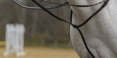 Martingales Breastplates Training Aids