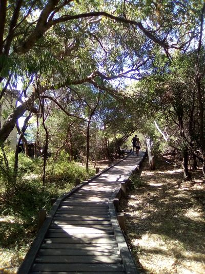 Walking Track through trees at Bunker Bay