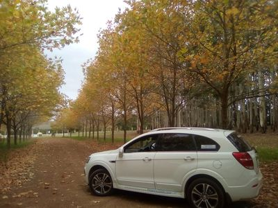 Luxury ola SUV next to Autumn colour Trees in winery driveway