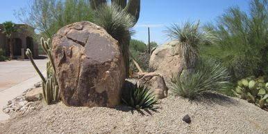 Accent boulder with cactus and gravel landscape