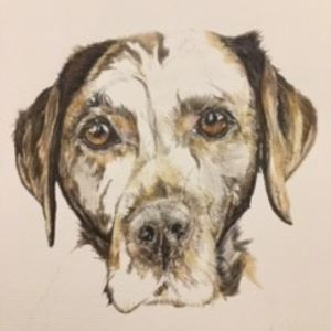 Coloured pencil sketch of chocolate labrador on gigclee print