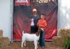 BAB4 Fantasy shown and owned by Giovanni Beretta- Region 2 Reserve Jr Champion % Doe