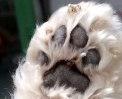 A clear photo of your pets paw if all we need to make your pets beautiful pawprint jewellery,Poynton