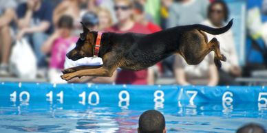 Dock Diving Competition with Certified Training Specialists so your dog can try the sport!