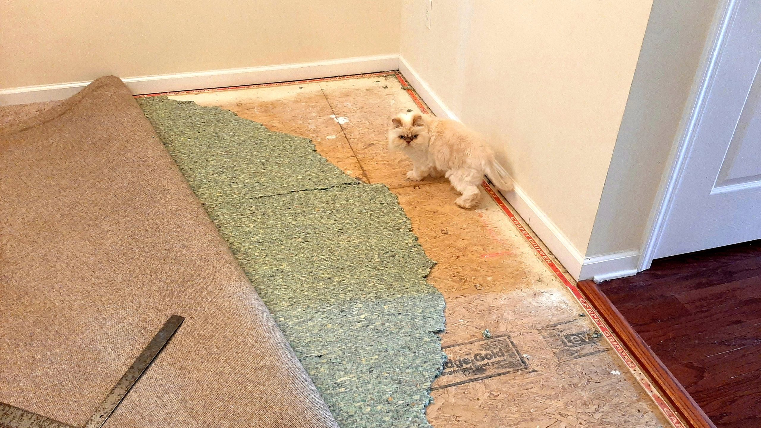 The Carpet Handyman performs carpet stretching and carpet pad replacement in raleigh nc to fix pet d