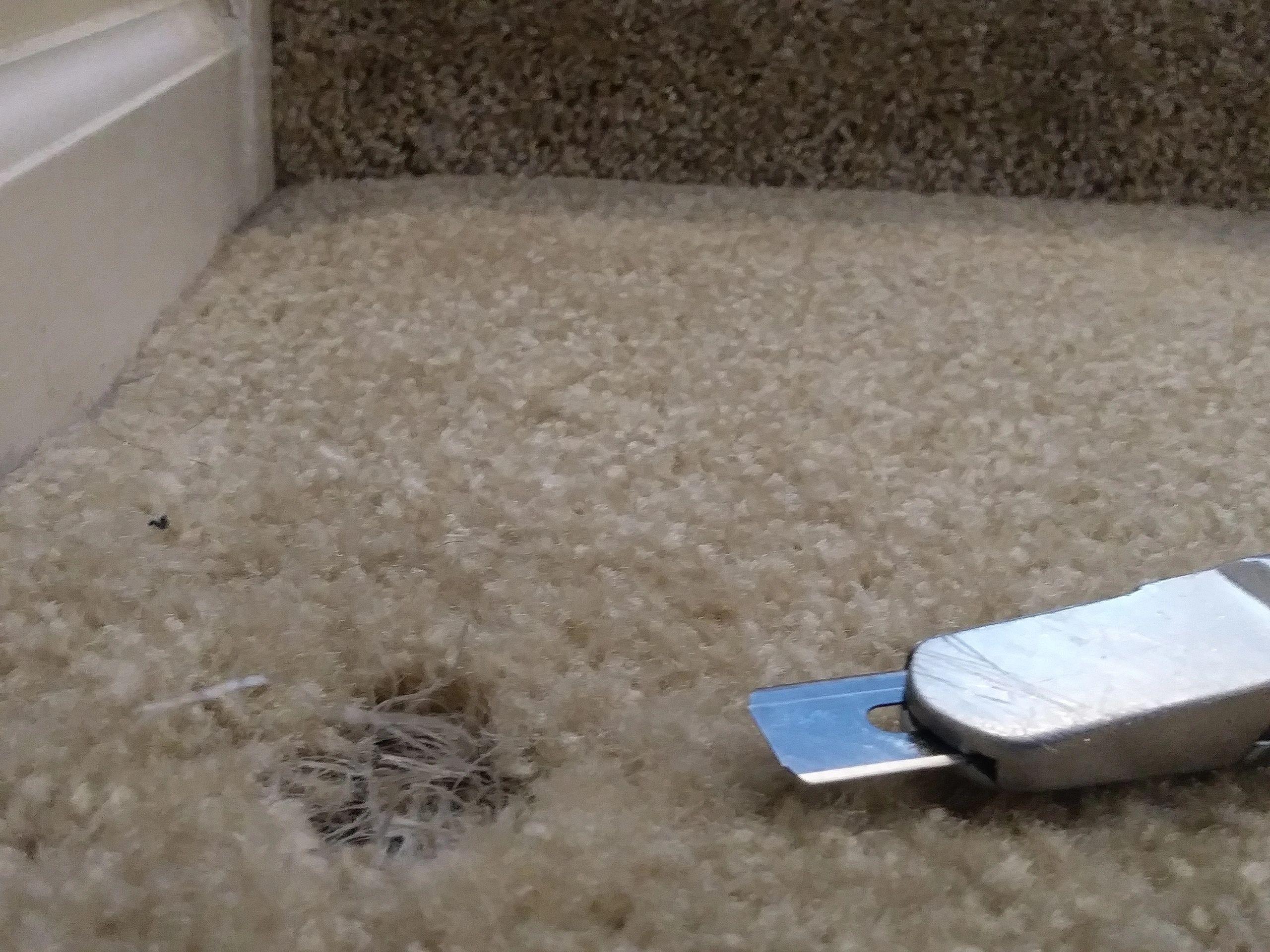 Carpet Stretching & Carpet Repairs In Cary NC