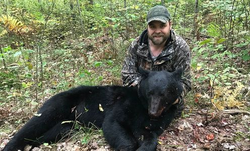 Wisconsin Bear Hunting, Wisconsin Bear Taxidermy