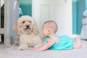 Pet and kids friendly carpet cleaning. Eco friendly carpet cleaning