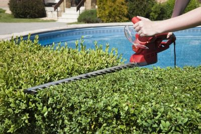 Hedging Hedge Trimming Hedge Pruning  Hedge Growth FAQ Hedges  Hedges Toronto