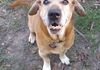 Lucy/Female/Basset and Sharpei mix/11 years/Loves everyone