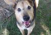 Jimmy/Shepherd mix/Male/11yrs/Loves to play in water/good with other dogs and people of all ages