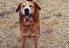 Caleb/SharPei and Retriever mix/Male/8 Years old/Active and fun