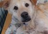 Ethel/Retriever mix/Female/16 years old/Special needs