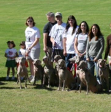 About Valley of the Sun Weimaraner Club